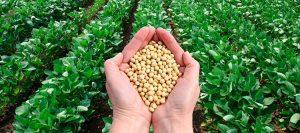 Política de incentivo a biocombustíveis, RenovaBio agora é lei