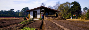 Sancionado com vetos, Funrural ainda ajuda produtores rurais