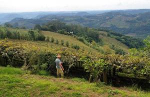 Julgamento do STF sobre Código Florestal favorece pequenos produtores