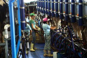Aprovado em comissão projeto de Sérgio Souza que beneficia produtores de leite